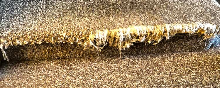 Best Carpet Repair Curtin